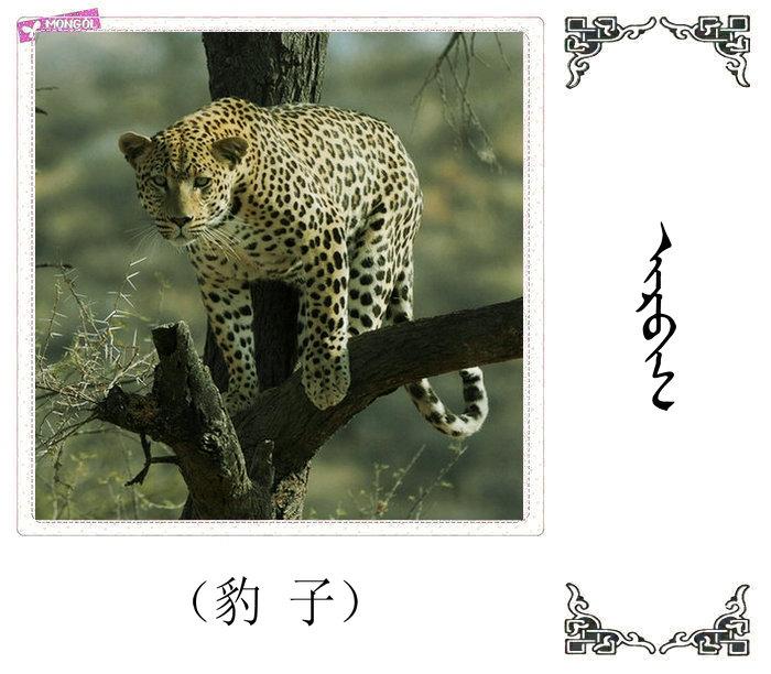 哺乳动物的名字(蒙古文 汉语) 第36张