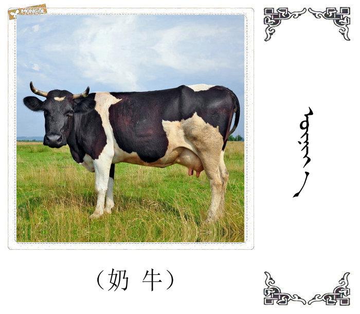 哺乳动物的名字(蒙古文 汉语) 第37张
