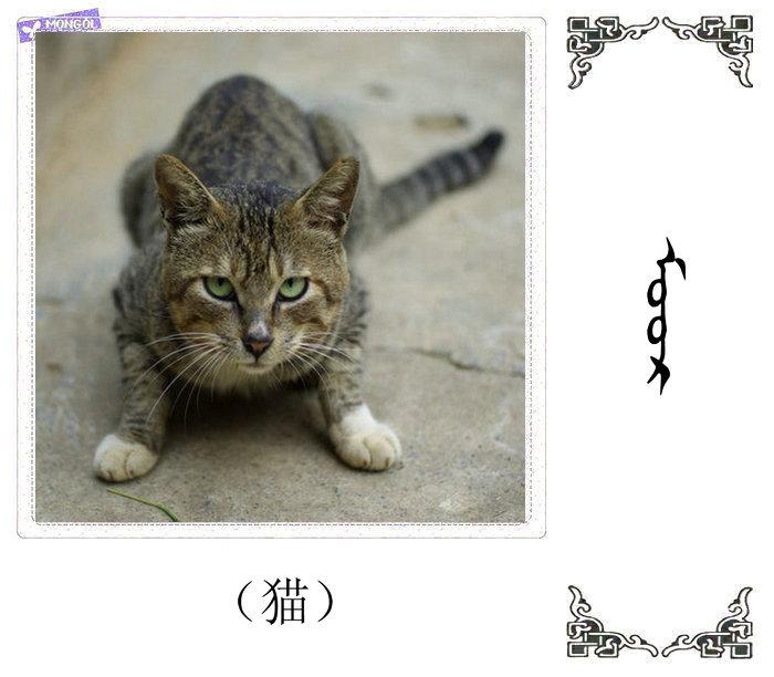 哺乳动物的名字(蒙古文 汉语) 第42张