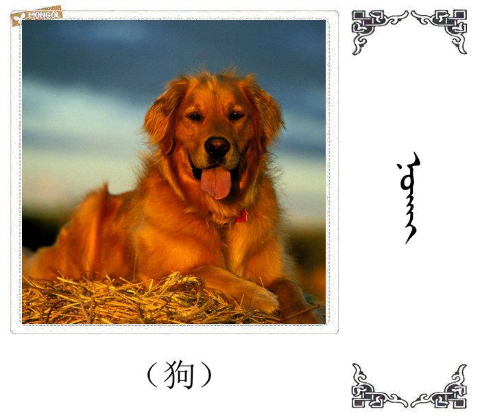 哺乳动物的名字(蒙古文 汉语) 第38张