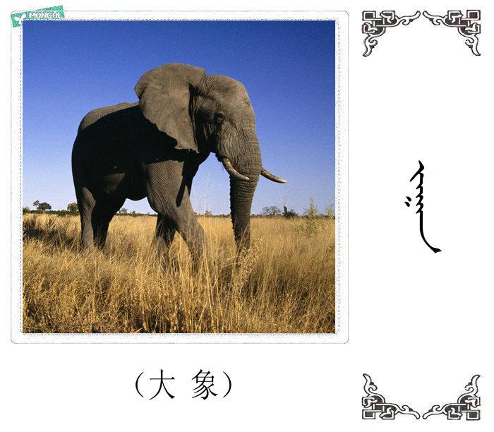 哺乳动物的名字(蒙古文 汉语) 第39张