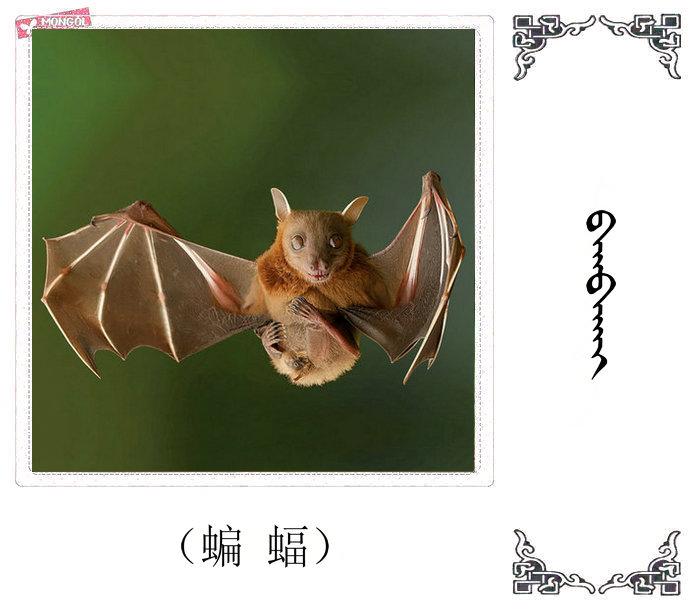 哺乳动物的名字(蒙古文 汉语) 第40张