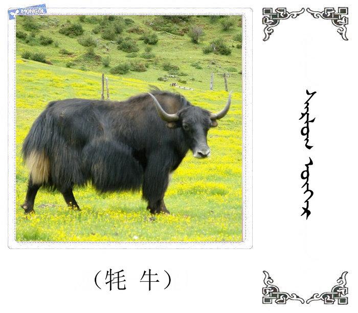 哺乳动物的名字(蒙古文 汉语) 第41张