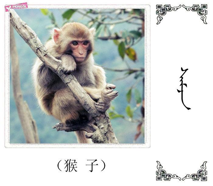 哺乳动物的名字(蒙古文 汉语) 第46张
