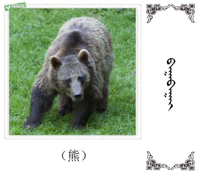 哺乳动物的名字(蒙古文 汉语) 第44张