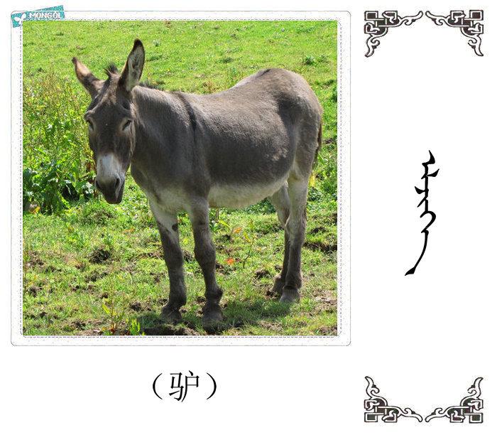 哺乳动物的名字(蒙古文 汉语) 第47张