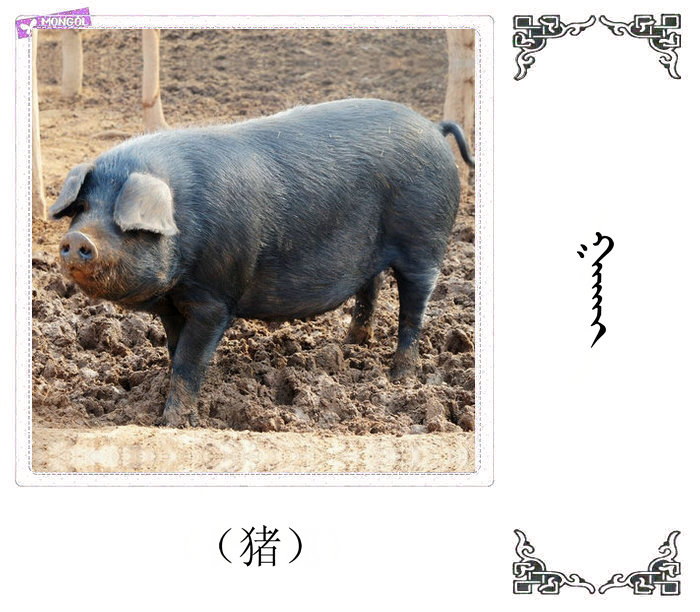 哺乳动物的名字(蒙古文 汉语) 第51张