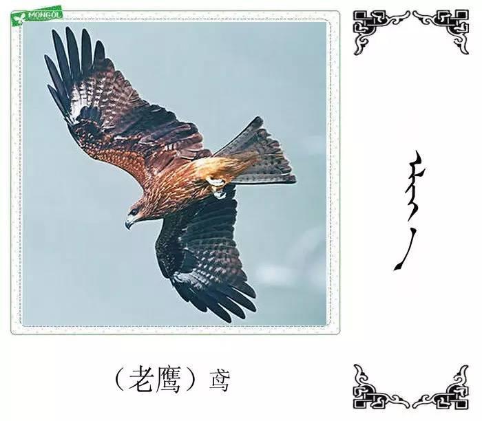54种鸟类的名字,双语解释(蒙古文 汉语) 第5张