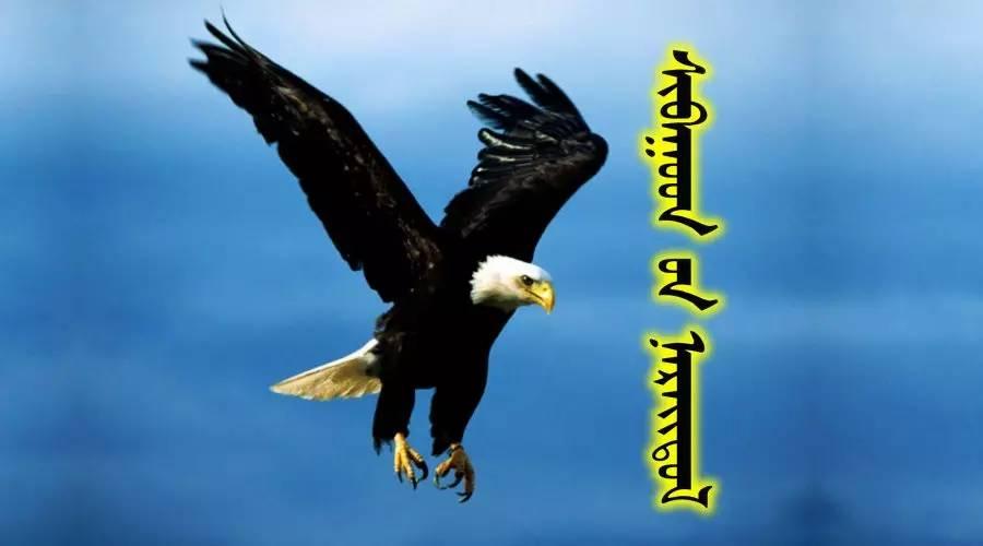54种鸟类的名字,双语解释(蒙古文 汉语) 第1张