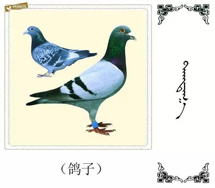 54种鸟类的名字,双语解释(蒙古文 汉语) 第13张