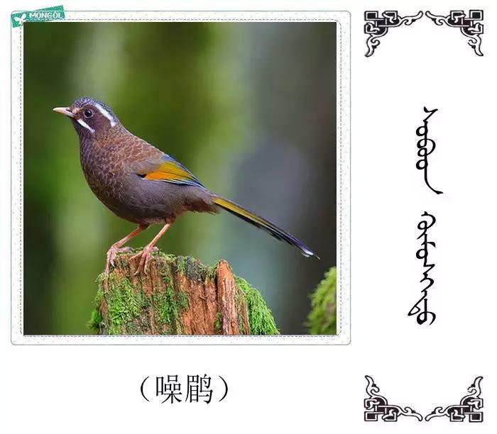 54种鸟类的名字,双语解释(蒙古文 汉语) 第46张