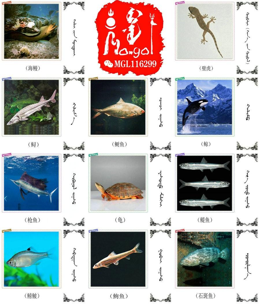 名词合集:水生.两栖.爬行类动物的名称81种(蒙古文 汉语) 第5张
