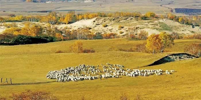 【蒙古文化】禁牧和圈养反让草场退化 ... 第1张