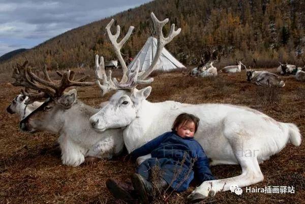 摄影集 | 蒙古察坦驯鹿族影像 · Hamid Sardar 第9张