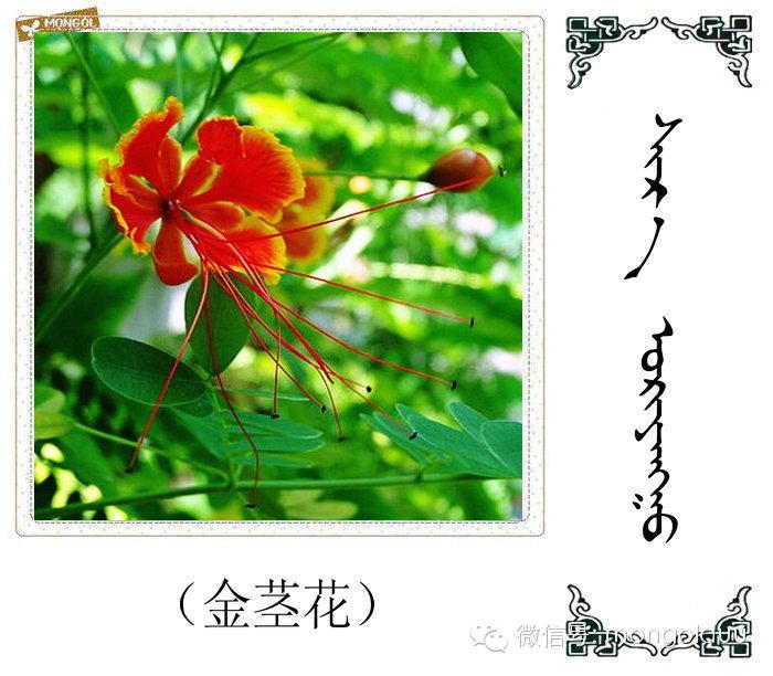 蒙古花的名词(花) 第1张