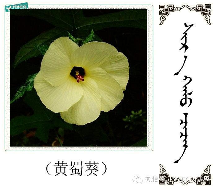 蒙古花的名词(花) 第25张