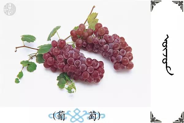 蒙古名词(水果) 第18张