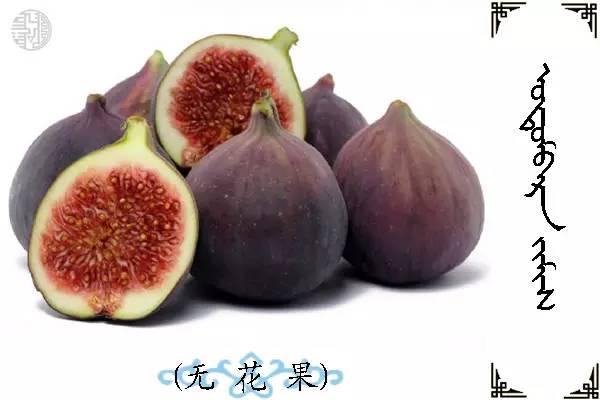 蒙古名词(水果) 第19张