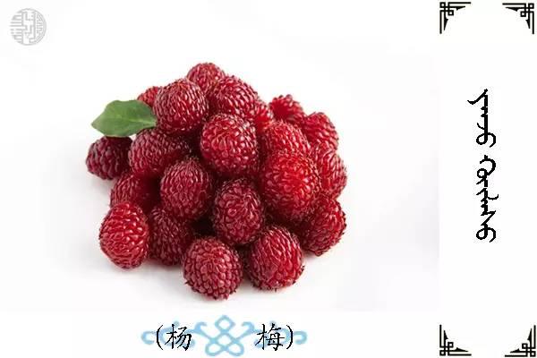 蒙古名词(水果) 第25张