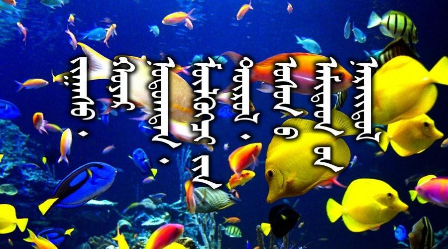 名词合集:水生.两栖.爬行类动物的名称81种(蒙古文 汉语) 第1张