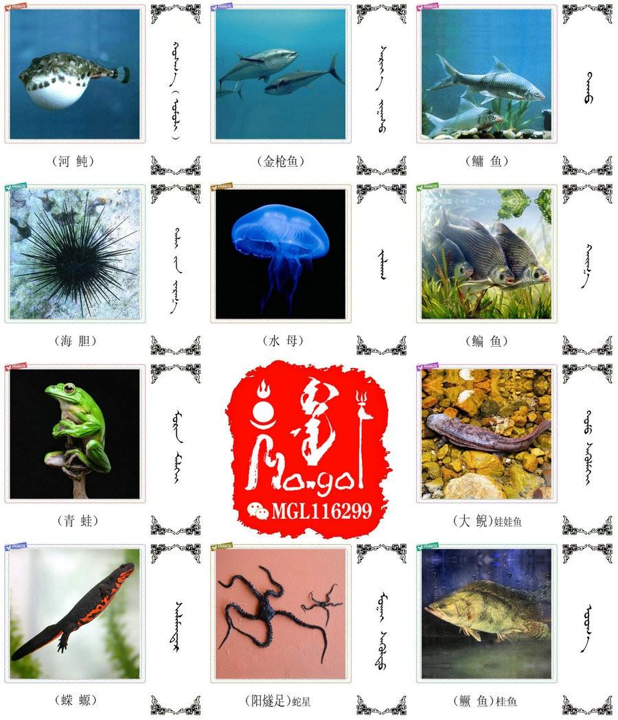 名词合集:水生.两栖.爬行类动物的名称81种(蒙古文 汉语) 第3张