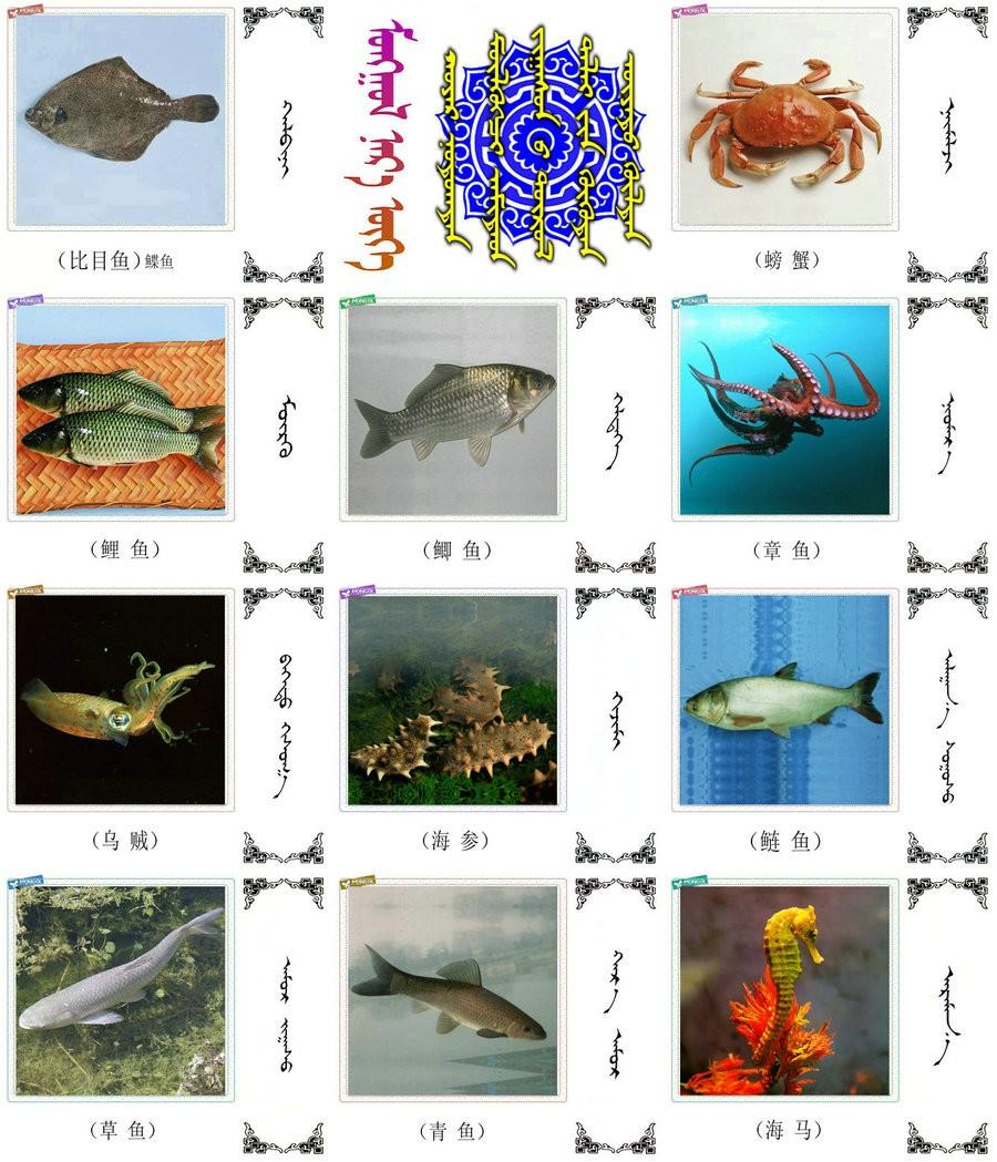 名词合集:水生.两栖.爬行类动物的名称81种(蒙古文 汉语) 第2张