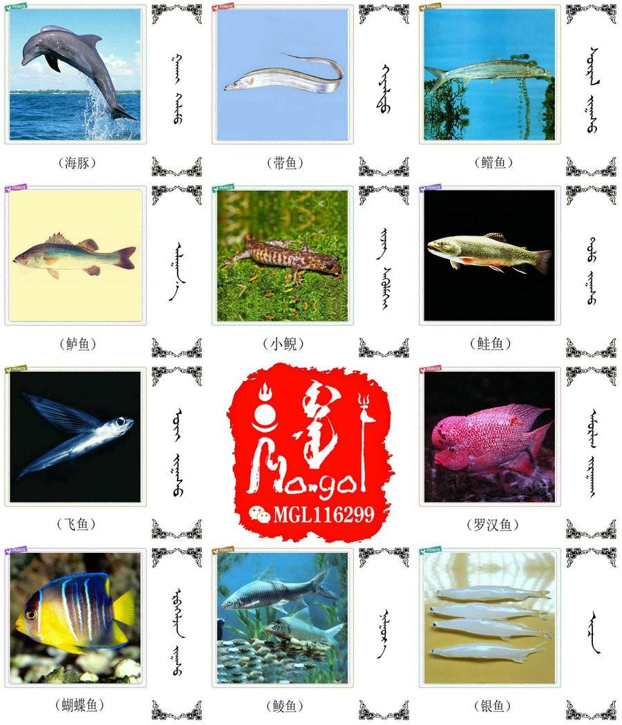 名词合集:水生.两栖.爬行类动物的名称81种(蒙古文 汉语) 第6张