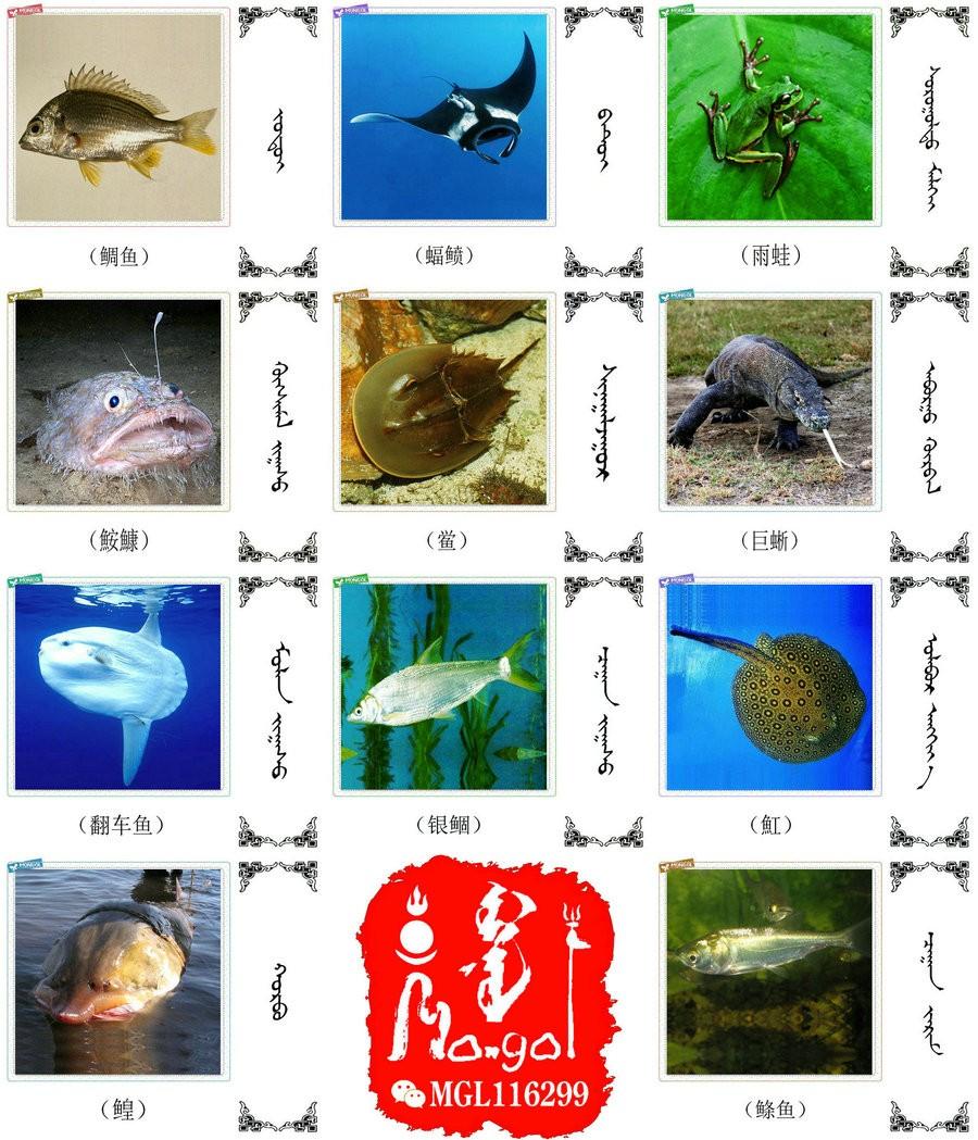名词合集:水生.两栖.爬行类动物的名称81种(蒙古文 汉语) 第7张