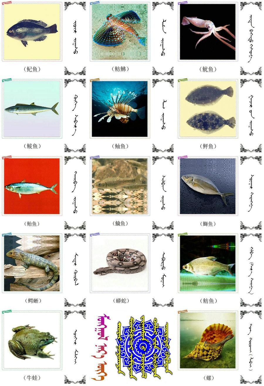 名词合集:水生.两栖.爬行类动物的名称81种(蒙古文 汉语) 第8张