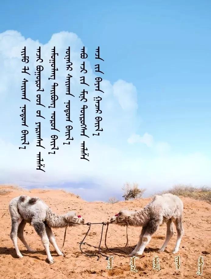 ◈ 蒙古歌词100首(第一部) 第19张