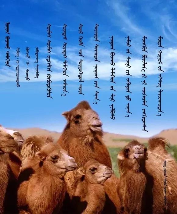 ◈ 蒙古歌词100首(第2部) 第8张