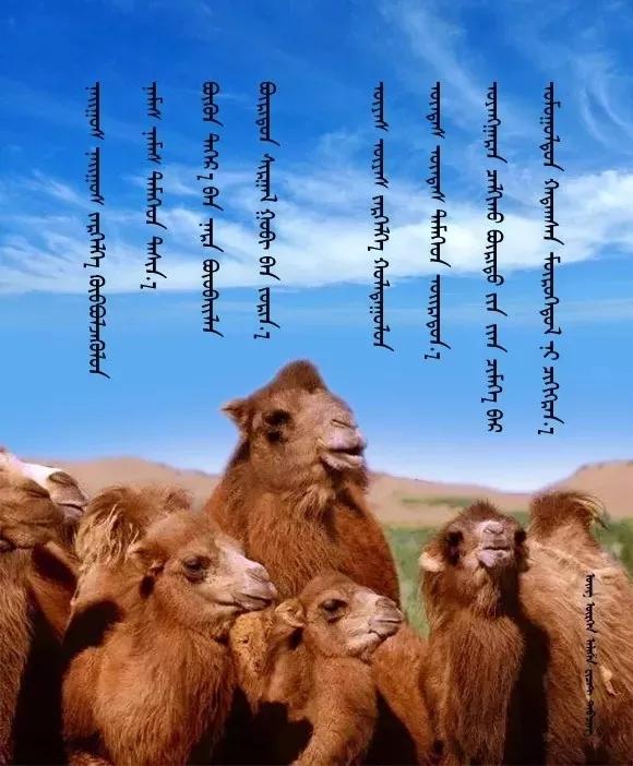 ◈ 蒙古歌词100首(第2部) 第10张