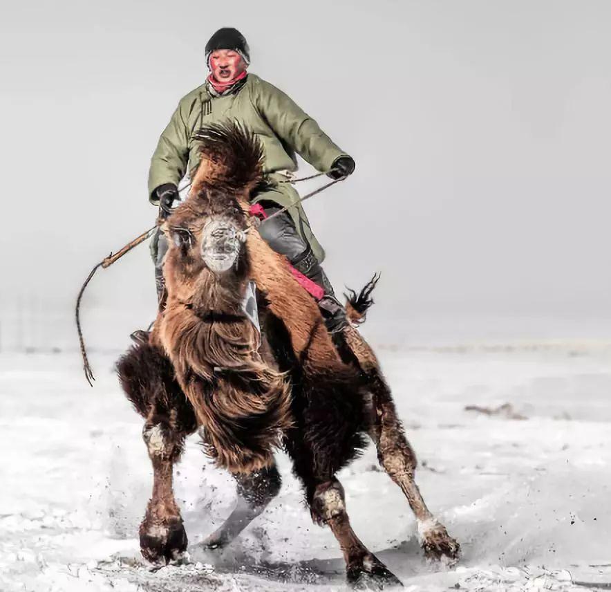 """拒绝刻板印象:""""蒙古人都很能喝""""""""蒙古人不可能不喝酒"""" 第6张"""