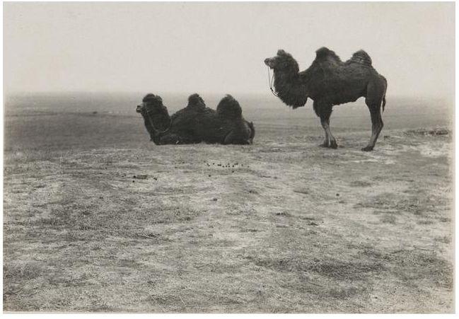 1924年的内蒙古通辽,老照片记录的是故事! 第4张