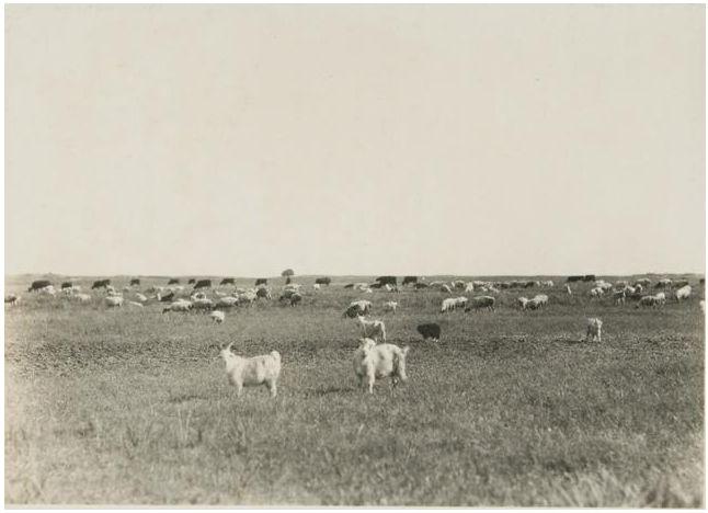 1924年的内蒙古通辽,老照片记录的是故事! 第18张