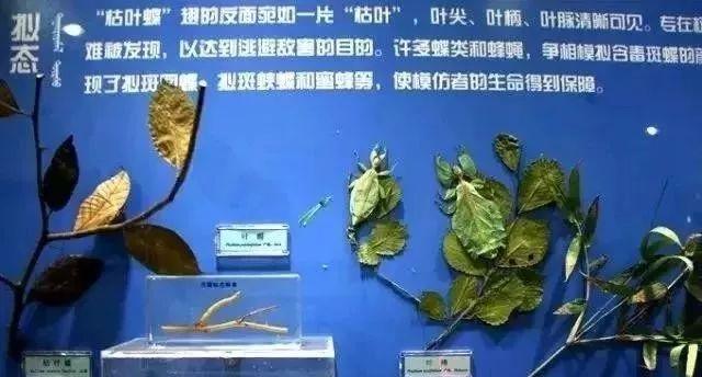 载入美国国际半翅目昆虫学家名人录的蒙古人 第9张