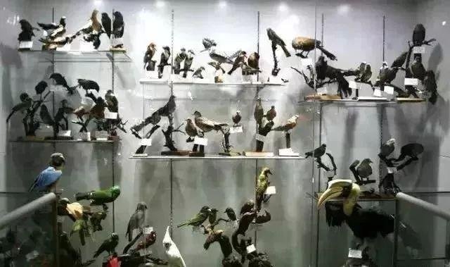 载入美国国际半翅目昆虫学家名人录的蒙古人 第14张