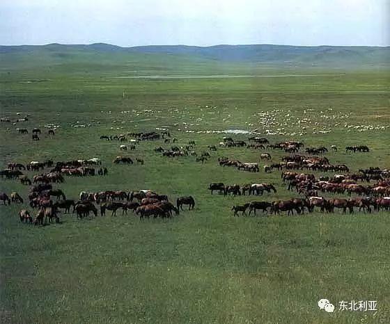 林中百姓,卫拉特蒙古人 第4张 林中百姓,卫拉特蒙古人 蒙古文化