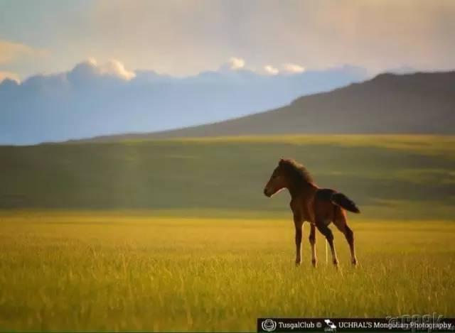 让人叹为观止的蒙古风景... 第4张