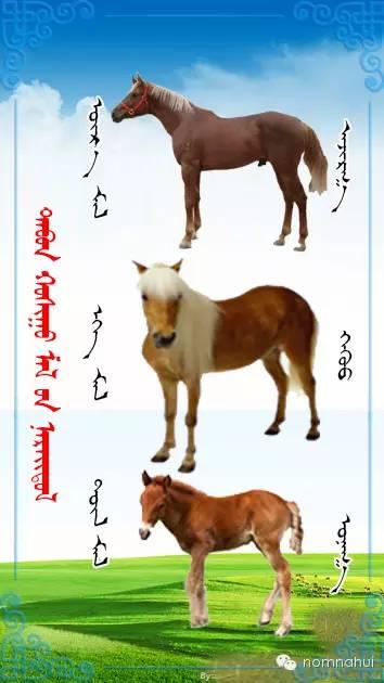 nomnahui(第二十九期)蒙古族五种牲畜蒙文名称对照图 第3张
