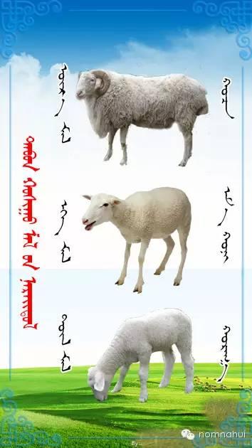 nomnahui(第二十九期)蒙古族五种牲畜蒙文名称对照图 第4张