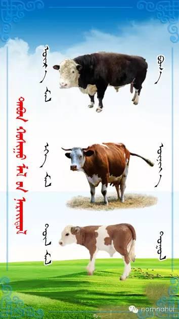 nomnahui(第二十九期)蒙古族五种牲畜蒙文名称对照图 第2张