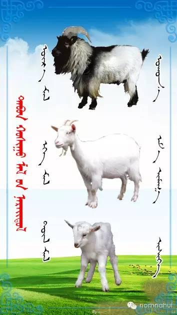 nomnahui(第二十九期)蒙古族五种牲畜蒙文名称对照图 第5张
