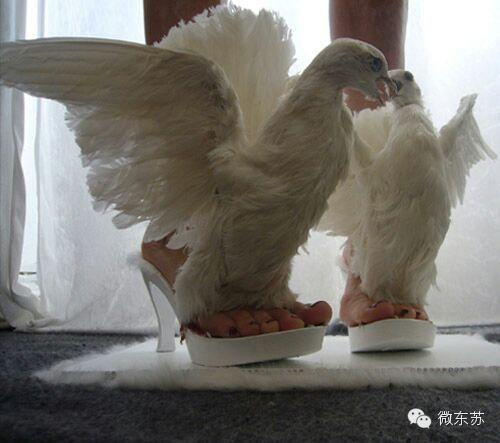 【蒙古设计师作品】这样的马蹄鞋,你想拥有吗? 第5张