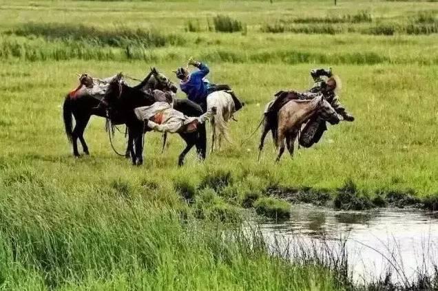 蒙古人《醉骑》?非常震撼的视频! 第5张