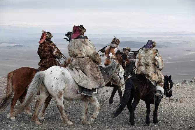 蒙古猎鹰一出 草原狼都悲剧 ,很震撼的视频! 第1张