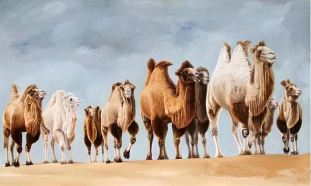 艺术家恩和:与骆驼的不解情缘 第11张