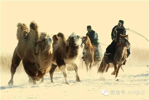 内蒙古摄影家—宝音摄影作品  情系草原 第24张