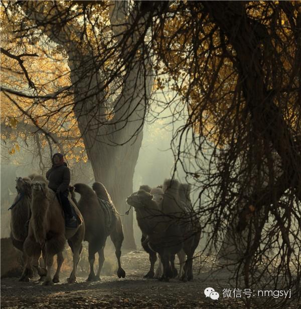 内蒙古摄影家—宝音摄影作品  情系草原 第21张