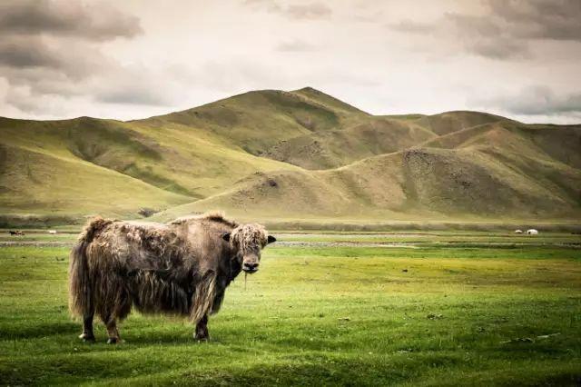 摄影纪实  传统蒙古人的日常 第17张